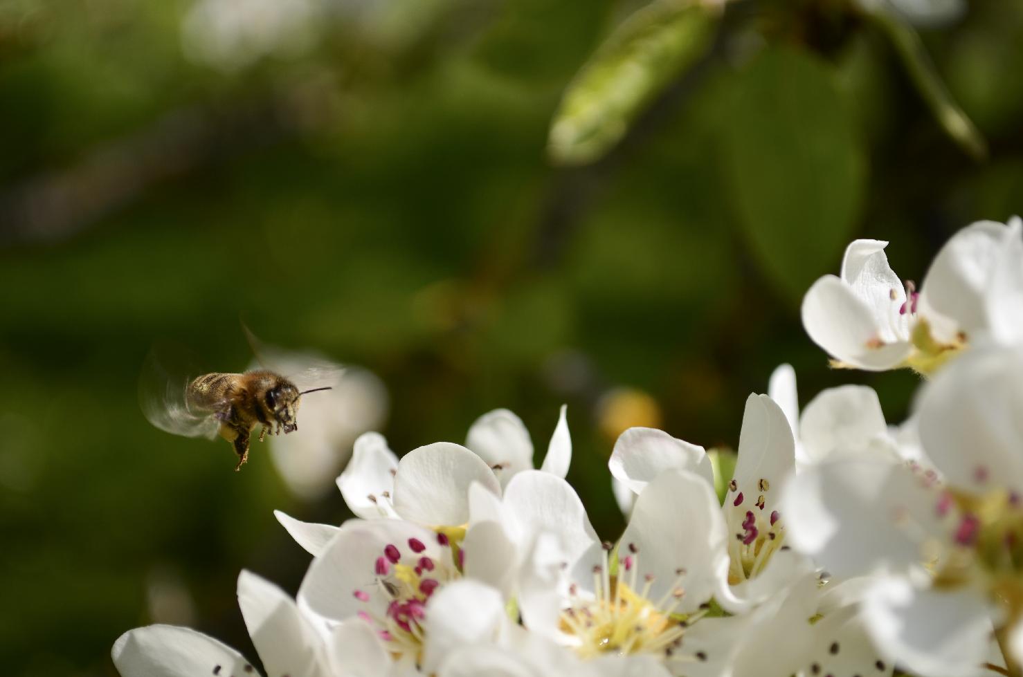 Poirier et abeille transaction - Yves Bonis